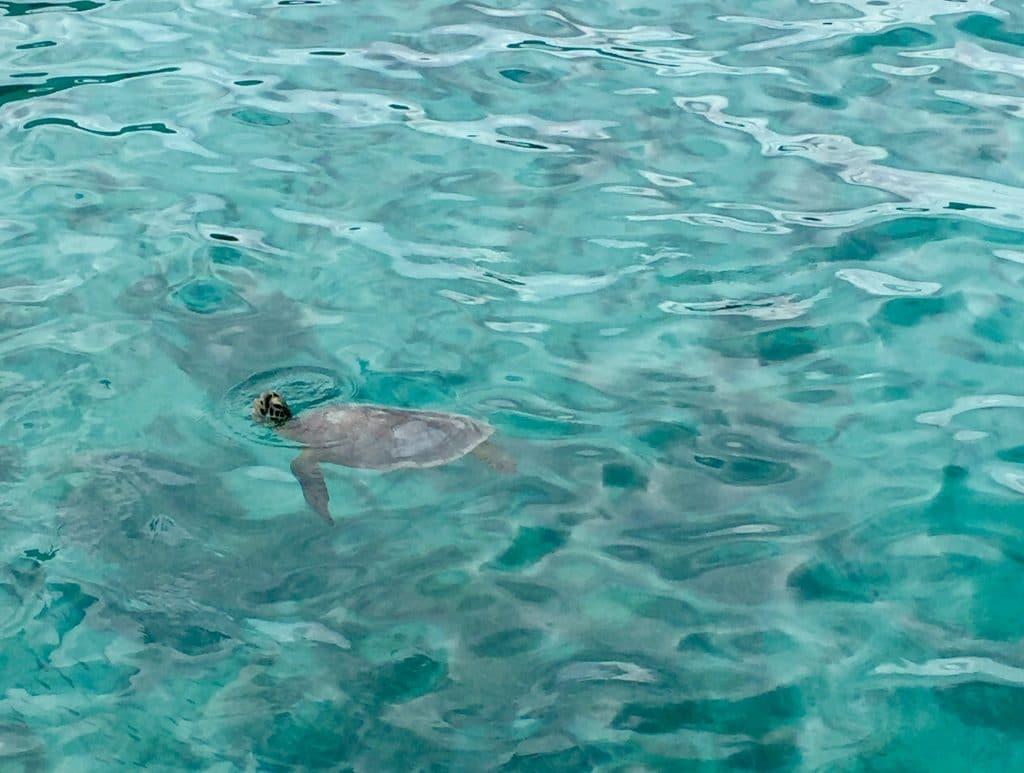 Lifou - Nouvelle-Caledonie -nager avec les tortues