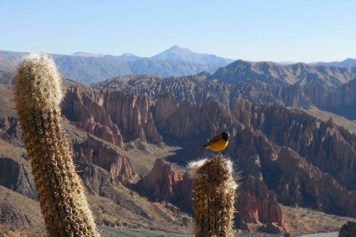 Paysages Tupiza Bolivie