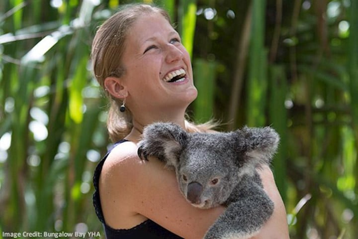 Magnetic Island YHA - koalas - auberges de jeunesse insolites en Australie