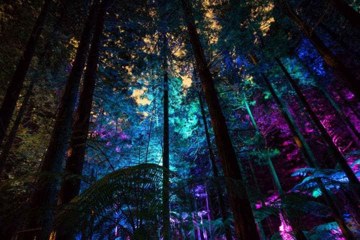 Redwoods nightlights - Rotorua