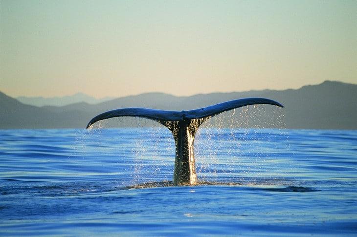 Ou voir les animaux de Nouvelle-Zélande - cachalot - baleine - nature - kaikoura