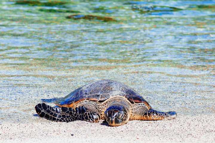 voyage en octobre Nicaragua tortue La Flor